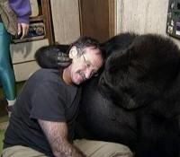 Robin Williams y Koko la Gorila